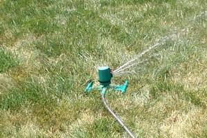 Sprinkler on dry grass.