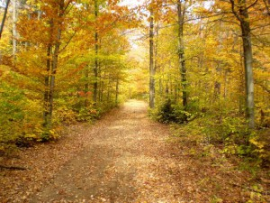 Path in autumn forest with fallen leaves.