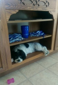 Puppy lying on a wood shelf in the kitchen.