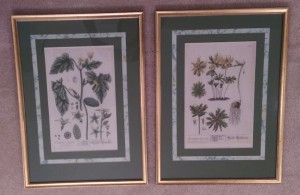 Two framed pictures of flowers.