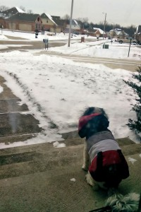 Puppy sitting on the porch on a snowy day, wearing a coat.