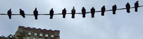 Birds sitting on a wire.