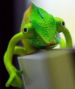 Front view of a mostly green chameleon.
