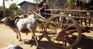 Wooden cart drawn by oxen on a dirt road.