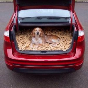 Dog sitting on a big heap of bones in a car.