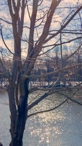 Pond with bare trees in winter