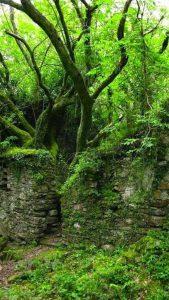Bright springtime green of Kerry Way Trail, Ireland