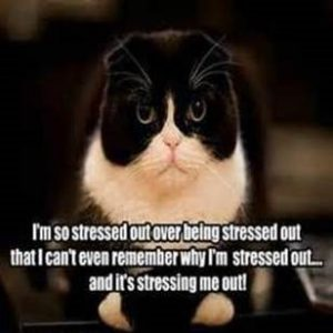"Cat picture that says ""I'm so stressed out over being stressed out that I can't even remember why I'm stressed out... and it's stressing me out!"""