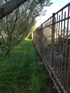 Aluminum fence with a willow hedge to the left.