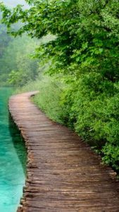 Wooden pathway beside water, trees, and bushes.