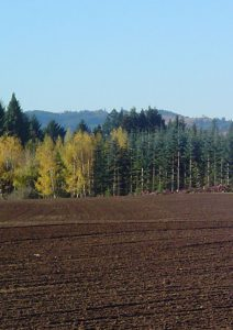 Newly planted field in autumn.
