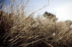 Landscape with dry, brown weeds.