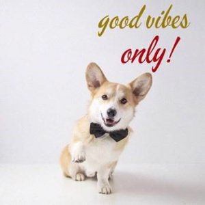 """Word-art that says """"Good vibes only!"""""""