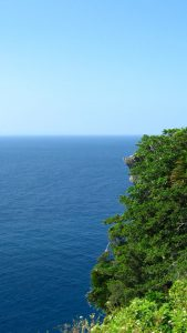 Cliff with trees and shrubs dropping away to the ocean.