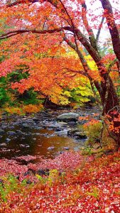 Colorful trees with falling leaves beside a creek.