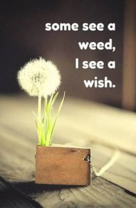 "Word-art with a dandelion that says ""Some see a weed, I see a wish."""