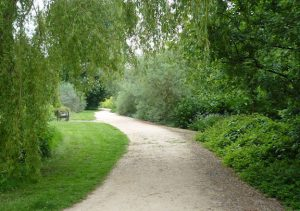 Path surrounded by greenery in a park.