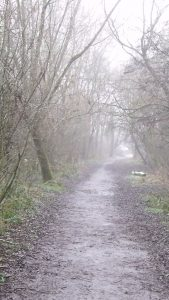 Foggy path through bare trees in a park.