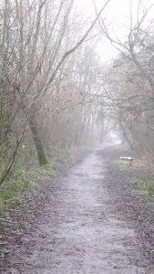 Foggy path through bare trees in a park.
