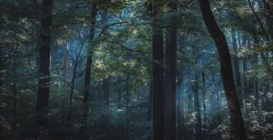 Photo of a dark forest with a smoky blue glow.