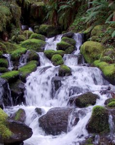Photo of a river tumbling over dark, mossy rocks.