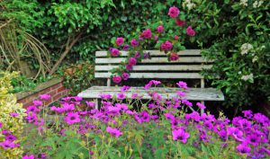 Garden bench with roses and other flowers.