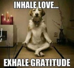 "Word-art with a dog in a meditation pose that says ""Inhale love... exhale gratitude."""
