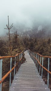 Steps leading down through a foggy brown forest.