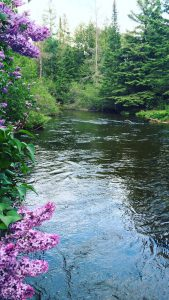 Michigan river landscape with flowers and trees